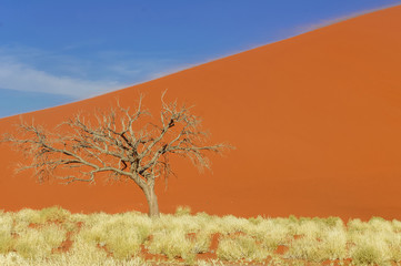 Dunes of Namib desert, Namibia, South Africa