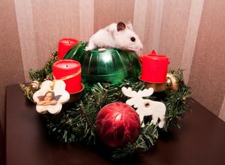 Little hamster in christmas tree
