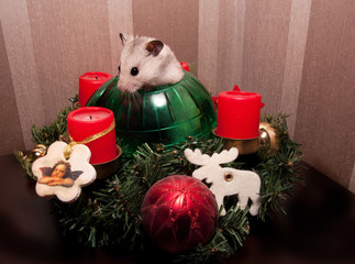 Little hamster in christmas tree