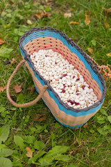 haricot beans in basket on green grass