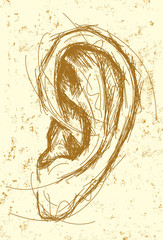 Ear Drawing