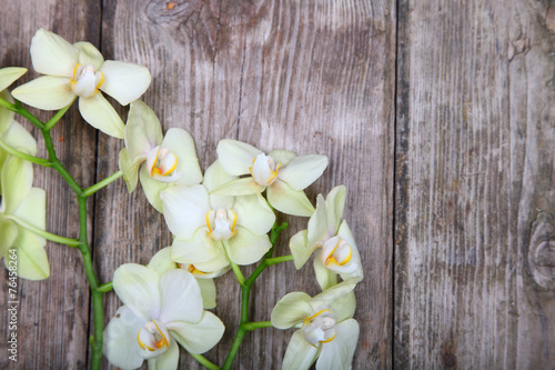 Foto op Canvas Lilac Orchid (Phalaenopsis )