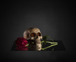 Skull Biting a Red Rose Stem