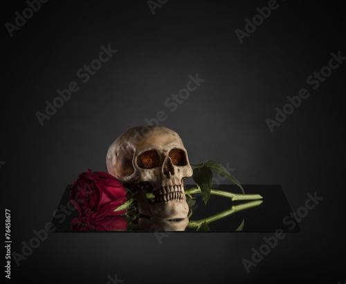 Fotobehang Begraafplaats Skull Biting a Red Rose Stem