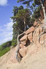 Saredegna: Il granito e piante marittime