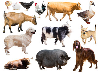 Set of dog, pig and other farm animals