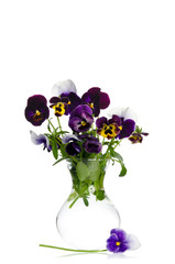 Beautiful pansies in transparent vase