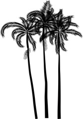 three high palm trees isolated on white
