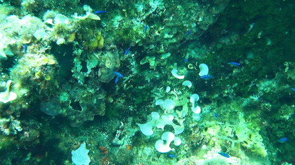 Underwater footage of a shoal of young fish