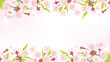 Cherry Blossom background-frame