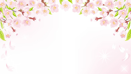Cherry Blossom background-above