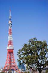 真冬の東京タワー