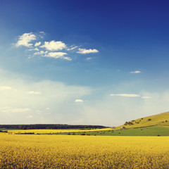 Summer Landscape Flowers Field Sky Grass Concept
