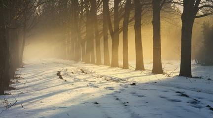 Fog and sunlight