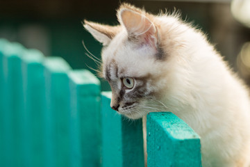 Cute kitten on the fence