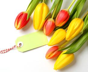 Tulpen mit Papier