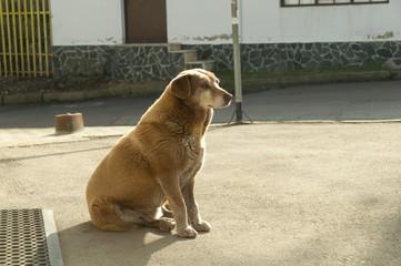 Stray dogs on street