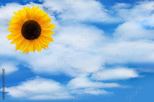 canvas print picture Sonnenblume und Himmel