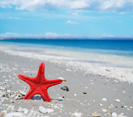 red starfish by the shore