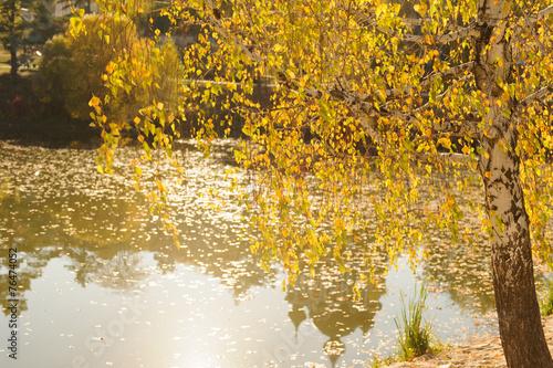 Obraz na Szkle Birch on Lake Shore