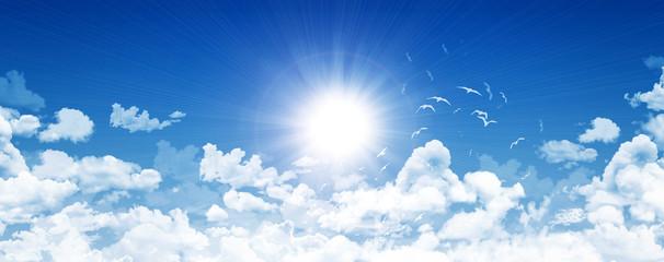 Clear sky, bright sun and birds