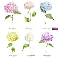 hydrangea, flowers, watercolor, pattern, wallpaper