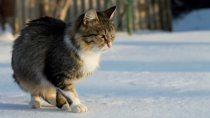 Portrait of fluffy cat in the snow