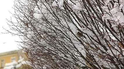 Birds hiding in treetops while heavy snowing.