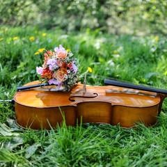 cello auf einer wiese