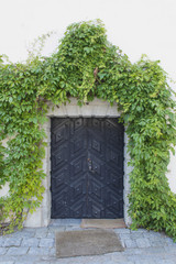 Old Door on the Ivy Covered Exterior Wall of an Historic Buildin