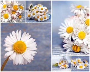 Gänseblümchen-Collage