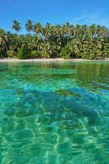 Beach with lush vegetation and clear water