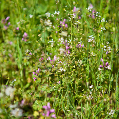 field grass background, shallow depth of field