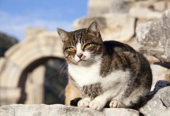 The Citizen of Ephesus