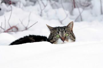 Im winterlichen Versteck