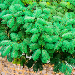 exotic green leaves on the wall background, India