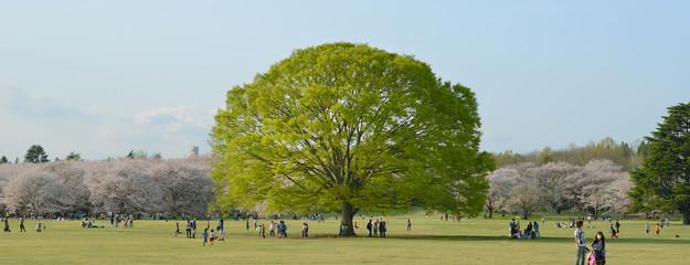 big tree in park