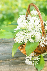 Bärlauchblätter und -blüten im Körbchen mit Textraum