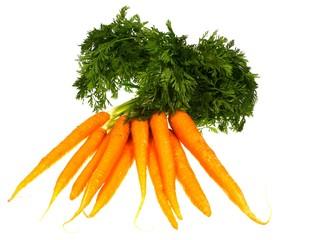 Fresh orange carrots with a green foliage