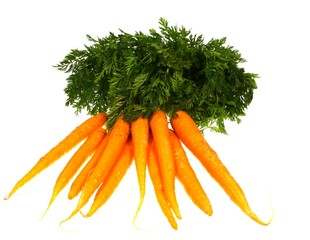 Isolated fresh orange carrots with green foliage
