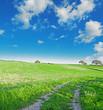 green meadow under a blue sky