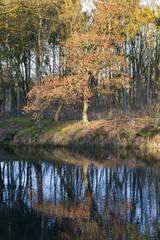 autumn nature in holland