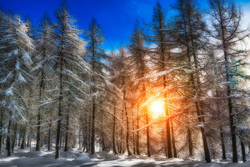Snowy forest with sunlight filtering
