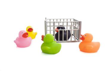 prison duck
