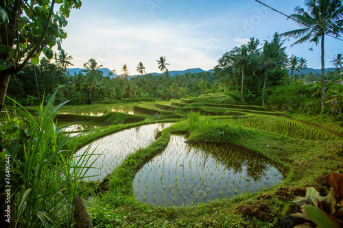 Foto op Plexiglas Indonesië Bali Rice Terraces