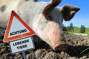 Achtung Lebende Tiere