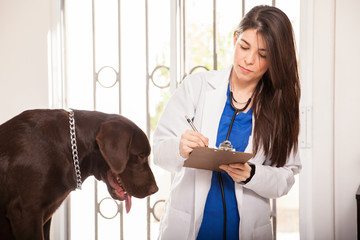 Reviewing medical history of a dog