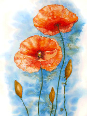 Watercolor red poppy flowers.