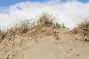 beach sand dunes against sky