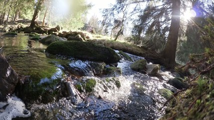 water stream in the woods